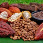 Existen 12 830 toneladas de cacao en grano almacenado