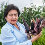 Identifican la variedad de maíz morado con mayor contenido de antocianina