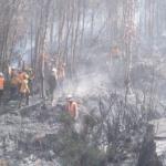 Incendio forestal en el Cusco está controlado