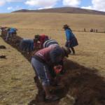 Ayacucho: Construyen zanjas de infiltración para evitar erosión de suelos
