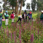 Becas para pasantías en áreas vinculadas del sector agrario