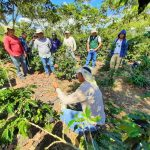 San Martín: Uniformizan criterios para mejorar la productividad del cultivo cafetero