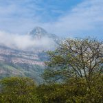 Socializan iniciativas para mejorar conservación bosques