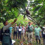 Amazonas: Senasa capacita a especialistas para controlar plagas en cultivos de cacao y banano