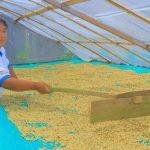 Cafetaleros del Valle del Monzón venden más de 53 toneladas de cafés a Europa