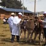 Junín: Acuerdan instalación de posta de inseminación vacuna en Concepción