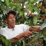 Minagri ejecuta empadronamiento para analizar con certeza situación del agricultor cafetalero