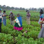 Productores orgánicos certificados pasarían de 30 mil a más de medio millón