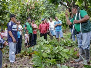 San Martín: Realizan capacitación para mejorar producción cacaotera en Campanilla