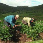 Sector agropecuario creció 3.3% en los primeros seis meses del año