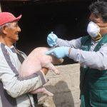 Proyectan vacunación de 27 mil cerdos en Moquegua
