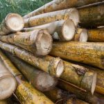 Chanchamayo: Promocionarán el uso del bambú