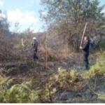 Extinguen incendios forestales en Pasco, Amazonas y Cajamarca