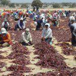 Minagri incrementará su presupuesto para el 2020 en beneficio de los pequeños agricultores