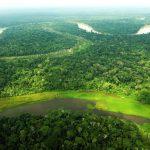 Gobiernos regionales amazónicos avanzan en proceso de zonificación forestal