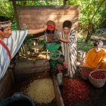 Impulsan proyecto agroforestal que beneficiará a 1500 productores en San Martín
