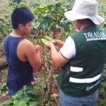 Realizan colecta de muestras plantas de café para descartar presencia de plagas