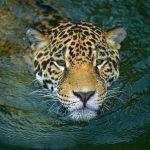 Conforman alianza para preservar la fauna silvestre y los bosques