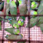 Arranca conferencia internacional sobre comercio ilegal de especies