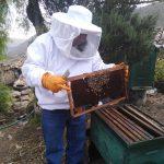 Ayacucho: Evalúan apiarios para descartar presencia de Loque Europea