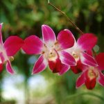 GORE San Martín impulsa Proyecto Orquídea