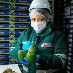 Productores agrícolas peruanos exportarán palta a México