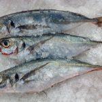 La Sociedad Nacional de Pesquería respaldó posición del Gobierno sobre límites en la captura del jurel