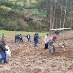 Amazonas: Siembran 1800 hectáreas de pastos para producción ganadera