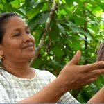 Potencian calidad del cacao peruano en el mercado internacional