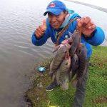 Mejorarán la productividad de la tilapia en San Martín