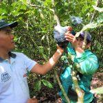 Tocache: Rescatan y seleccionan plantas de cacao con características de alta productividad