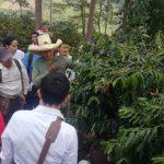 Cajamarca: Expertos internacionales en café participarán en feria de Jaén