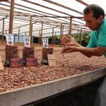 Instalarán casa de chocolate por el Día del Cacao Peruano