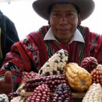 Recuperan cultivo de razas nativas de maíz