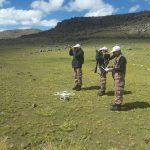Combaten caza de vicuñas con drones