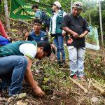 Cusco: Instalan plantones de caoba en comunidad nativa de Sankiroshi