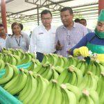 Exportaciones de banano orgánico superan los US$ 117 millones hasta setiembre de este año
