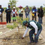 Implementan escuelas de campo en Tacna