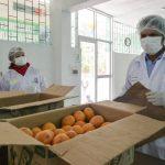 Incorporan productos de agricultores de Junín al programa Qali Warma