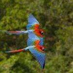 Actualizan lista de especies de fauna silvestre amenazadas en el Perú