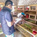 Ancash: Certifican promoción de productores como extensionistas en el manejo del cuy