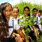 Devida otorgó 27 000 especies forestales a la provincia de Leoncio Prado