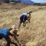 Sector agropecuario creció 4,2% en octubre