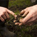 Urge promover buenas prácticas para preservar la productividad del suelo