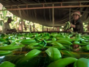 Invertirán S/ 7.6 millones en beneficio de agricultores de Ica y Piura