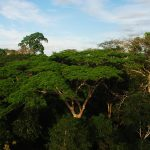 Madre de Dios: Promueven investigación sobre especies en peligro de extinción