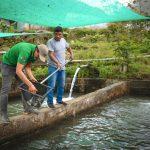 Vraem: Implementan producción de trucha y peces amazónicos