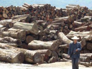 Luego de 20 años de presión, China prohibió el uso de madera ilegal