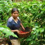 San Martín: Firmarán alianza para la producción de café sostenible