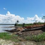 Anuncian plan para combatir tala ilegal